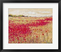 Framed Poppies' Evening Light I