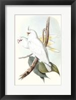 Framed Pastel Parrots II