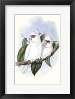 Framed Pastel Parrots IV