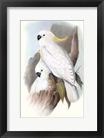 Framed Pastel Parrots V