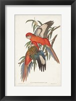 Framed Tropical Parrots I