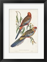 Framed Tropical Parrots II