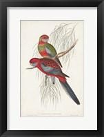 Framed Tropical Parrots III