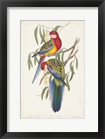 Framed Tropical Parrots IV