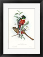 Framed Tropical Trogons V