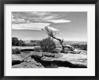 Framed Canyon Lands IV