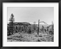 Framed Canyon Lands V