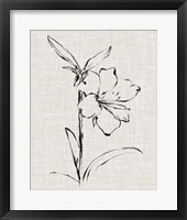 Framed Floral Ink Study I