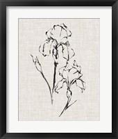 Framed Floral Ink Study II