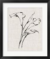 Framed Floral Ink Study IV