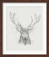 Framed Contemporary Elk Sketch II