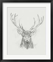 Framed Contemporary Elk Sketch II