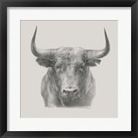 Framed Black Bull