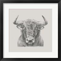 Framed Black & White Bull