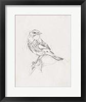 Framed Avian Study  I