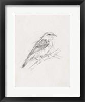 Framed Avian Study  II