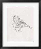Framed Avian Study  III