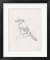 Framed Avian Study  IV