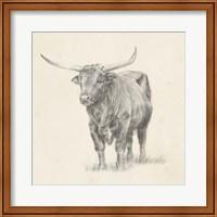 Framed Longhorn Steer Sketch I