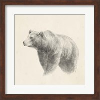 Framed Western Bear Study