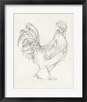 Framed Rooster Sketch I