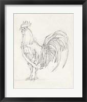Framed Rooster Sketch II