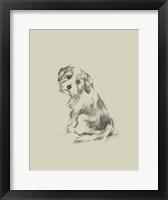 Framed Puppy Dog Eyes III
