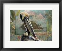 Framed Pelican Paradise II