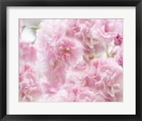 Framed Cherry Blossom Study IV