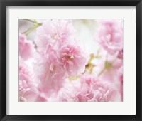 Framed Cherry Blossom Study V