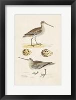 Framed Sandpipers & Eggs III