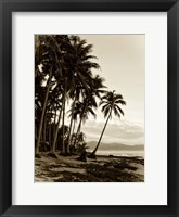 Framed Island Palms I
