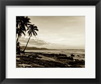 Framed Island Palms II