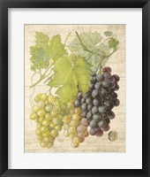Framed Grapevine I