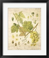 Framed Grapevine II
