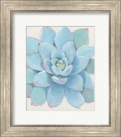 Framed Pastel Succulent I