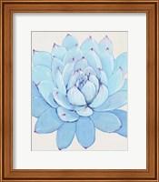 Framed Pastel Succulent II