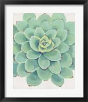 Framed Pastel Succulent III