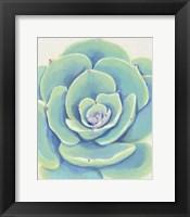 Framed Pastel Succulent IV