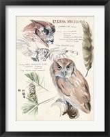 Framed Wildlife Journals I