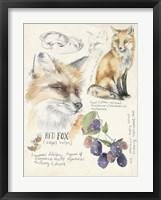 Framed Wildlife Journals III