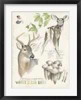 Framed Wildlife Journals IV