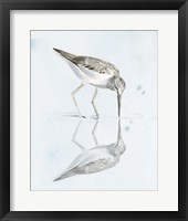 Framed Sandpiper Reflections I