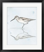 Framed Sandpiper Reflections II