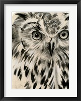 Framed Charcoal Owl I