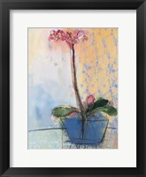 Framed Orchid and Lace II