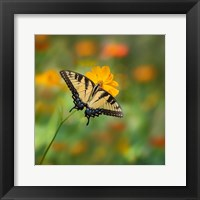 Framed Butterfly Portrait I