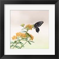 Framed Butterfly Portrait II