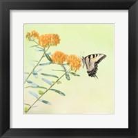 Framed Butterfly Portrait III