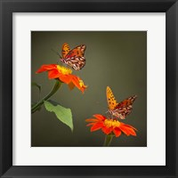 Framed Butterfly Portrait VI